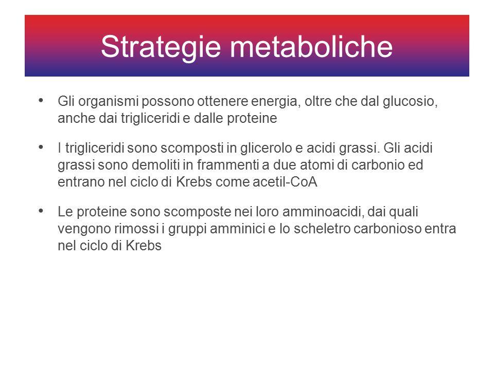 Gli organismi possono ottenere energia, oltre che dal glucosio, anche dai trigliceridi e dalle proteine I trigliceridi sono scomposti in glicerolo e acidi grassi.