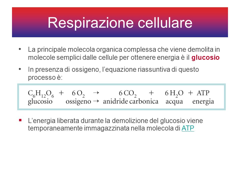 Respirazione cellulare La principale molecola organica complessa che viene demolita in molecole semplici dalle cellule per ottenere energia è il glucosio In presenza di ossigeno, l'equazione riassuntiva di questo processo è:  L'energia liberata durante la demolizione del glucosio viene temporaneamente immagazzinata nella molecola di ATPATP