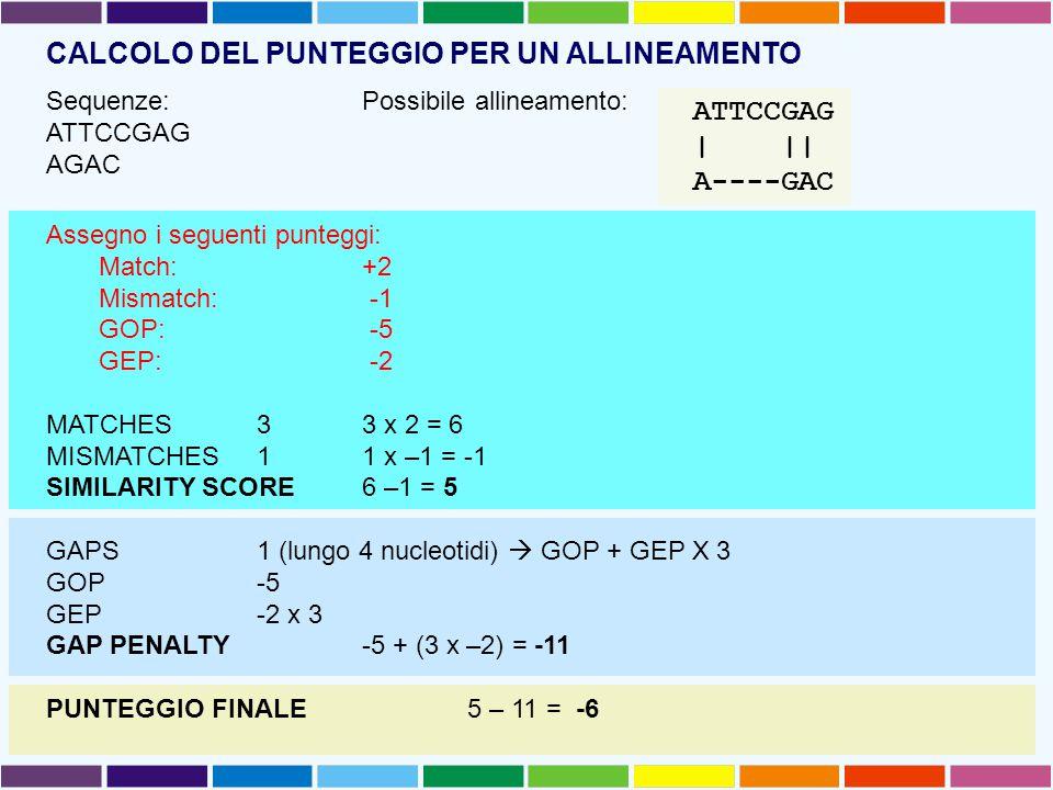 CALCOLO DEL PUNTEGGIO PER UN ALLINEAMENTO Sequenze:Possibile allineamento: ATTCCGAG AGAC Assegno i seguenti punteggi: Match: +2 Mismatch: -1 GOP: -5 GEP: -2 MATCHES33 x 2 = 6 MISMATCHES1 1 x –1 = -1 SIMILARITY SCORE 6 –1 = 5 GAPS1 (lungo 4 nucleotidi)  GOP + GEP X 3 GOP-5 GEP-2 x 3 GAP PENALTY-5 + (3 x –2) = -11 PUNTEGGIO FINALE5 – 11 = -6 ATTCCGAG | || A----GAC