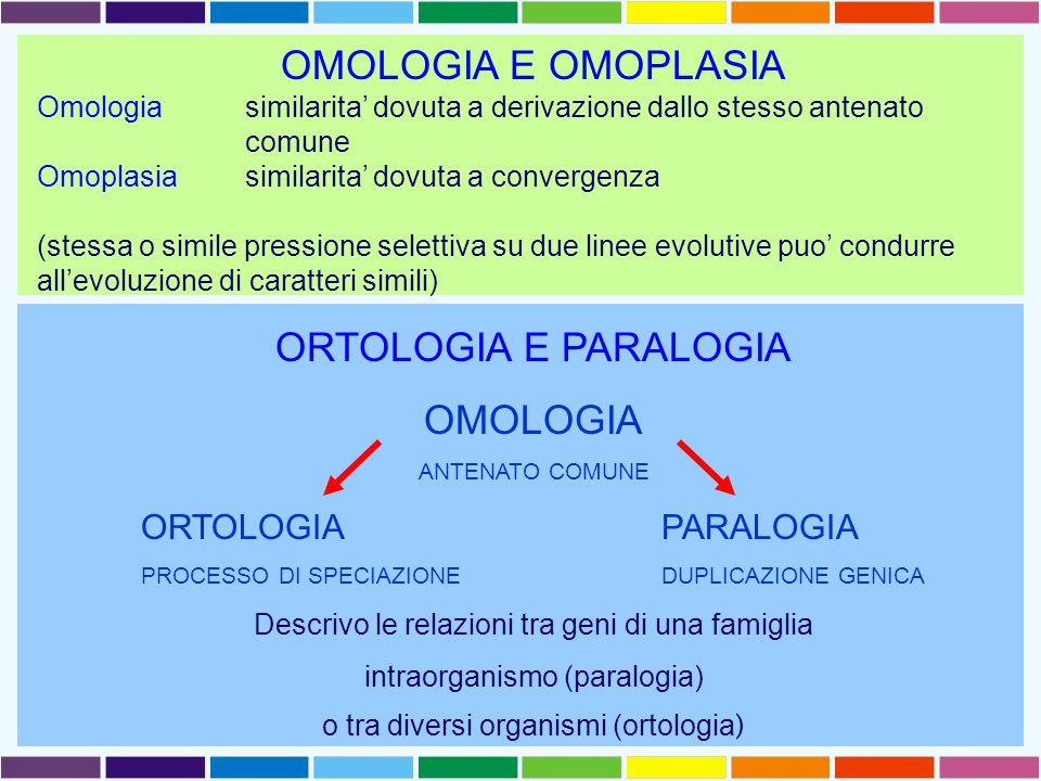 OMOLOGIA E OMOPLASIA Omologia similarita' dovuta a derivazione dallo stesso antenato comune Omoplasia similarita' dovuta a convergenza (stessa o simile pressione selettiva su due linee evolutive puo' condurre all'evoluzione di caratteri simili) ORTOLOGIA E PARALOGIA OMOLOGIA ANTENATO COMUNE ORTOLOGIAPARALOGIA PROCESSO DI SPECIAZIONEDUPLICAZIONE GENICA Descrivo le relazioni tra geni di una famiglia intraorganismo (paralogia) o tra diversi organismi (ortologia )