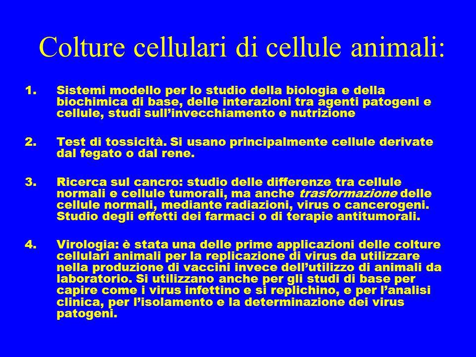 Colture cellulari di cellule animali: 1.Sistemi modello per lo studio della biologia e della biochimica di base, delle interazioni tra agenti patogeni