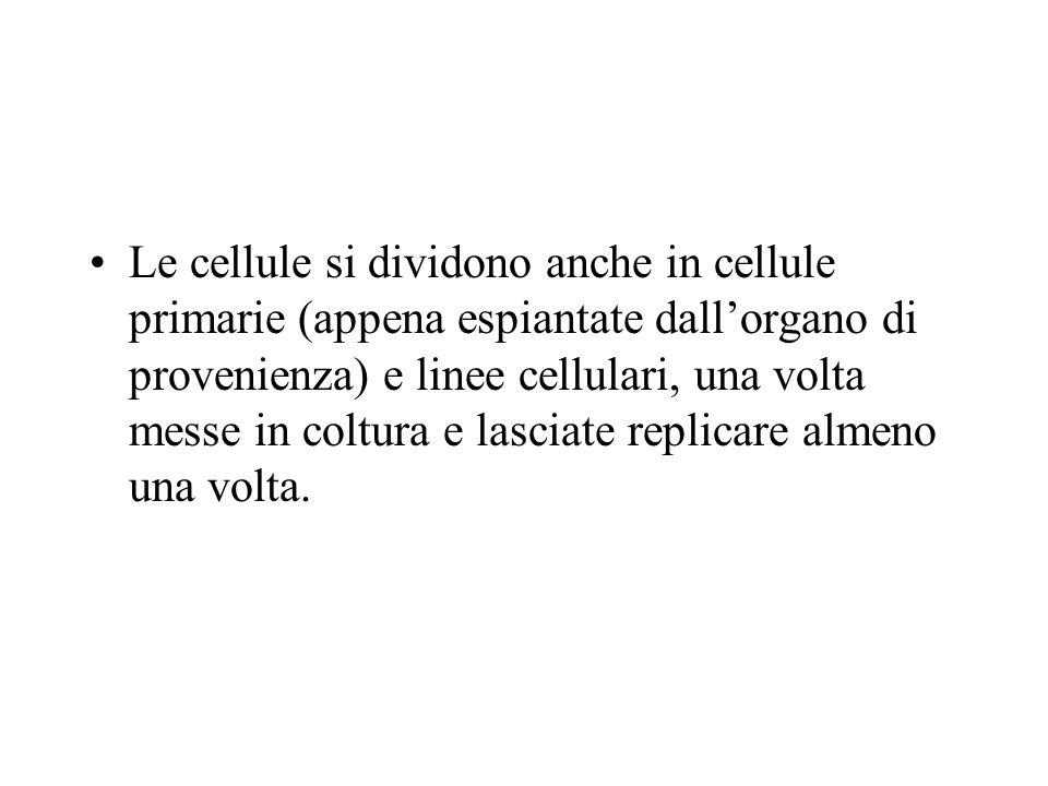 Le linee cellulari si dividono: In linee di cellule normali, che hanno una crescita finita, cioè si duplicano dalle 30 alle 50 volte, poi invecchiano e muoiono.
