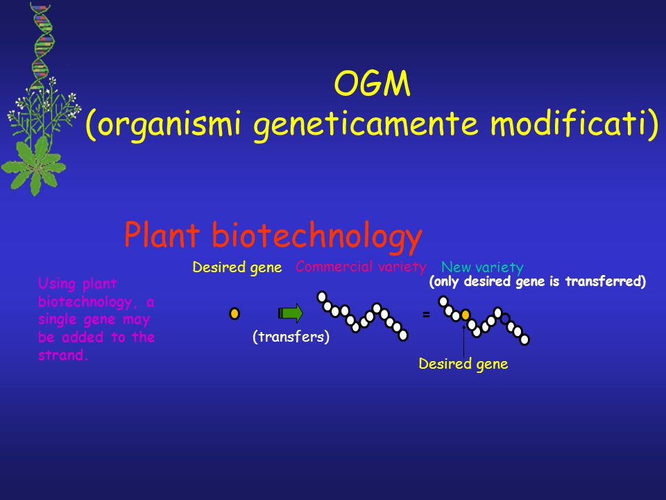 OGM (organismi geneticamente modificati) Plant biotechnology Using plant biotechnology, a single gene may be added to the strand. Desired gene Commerc