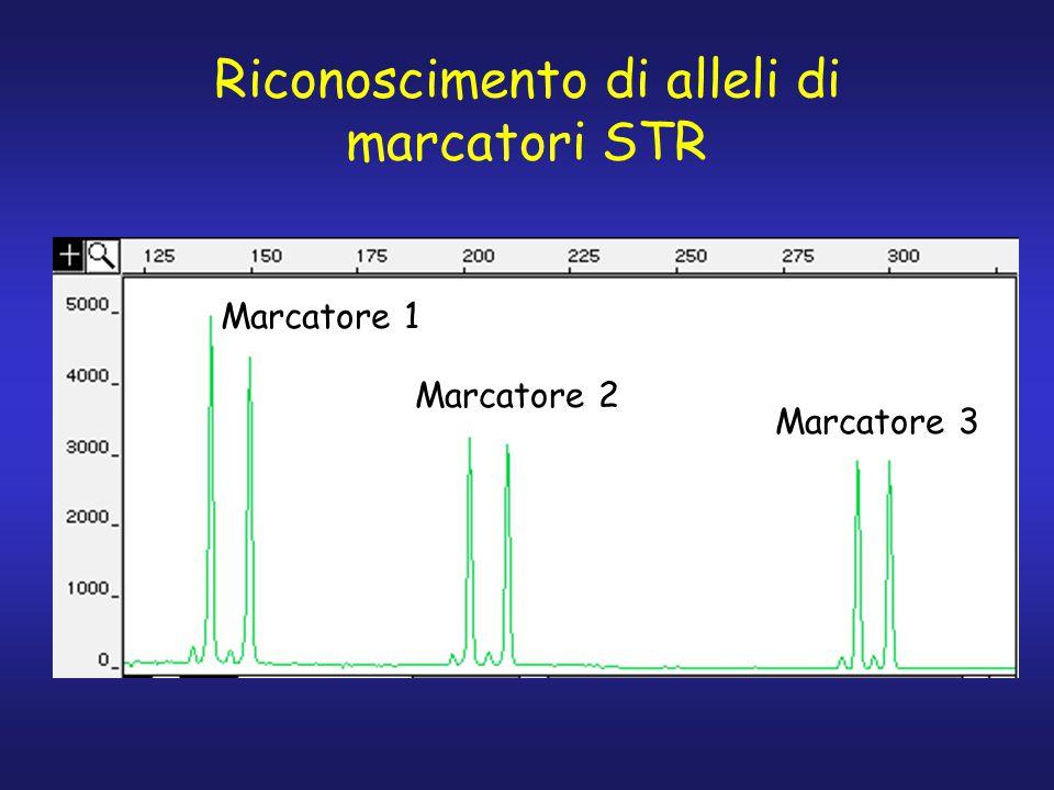 Riconoscimento di alleli di marcatori STR Marcatore 1 Marcatore 2 Marcatore 3