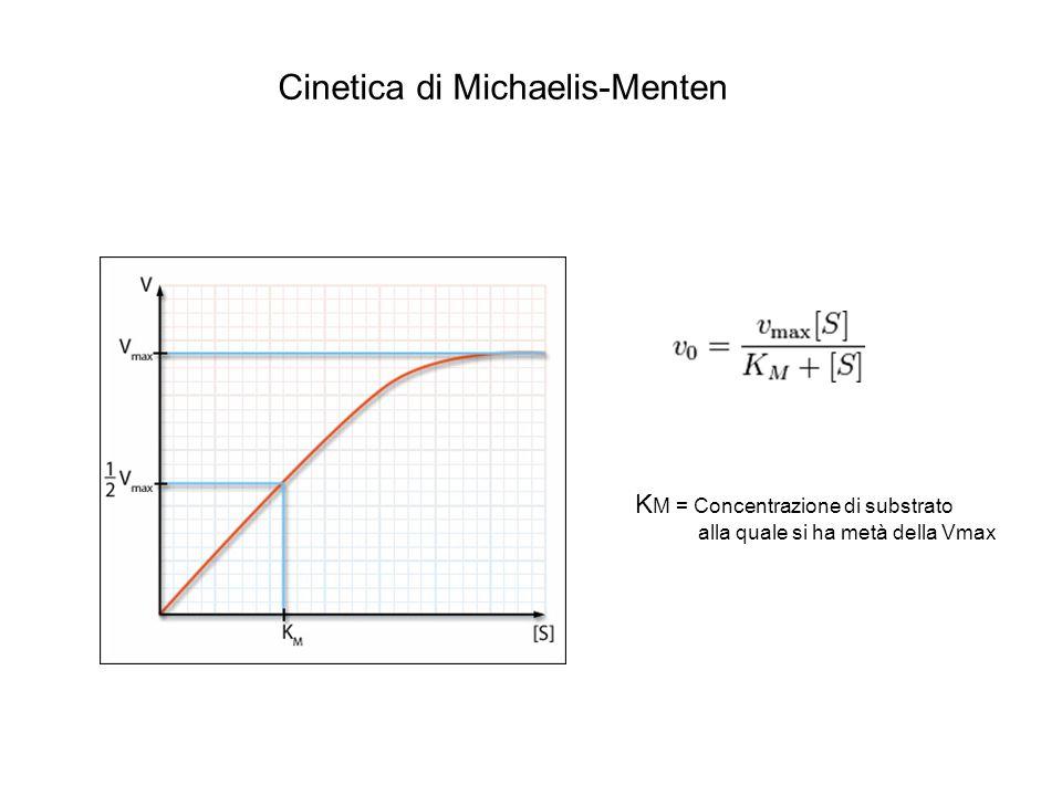 Cinetica di Michaelis-Menten K M = Concentrazione di substrato alla quale si ha metà della Vmax