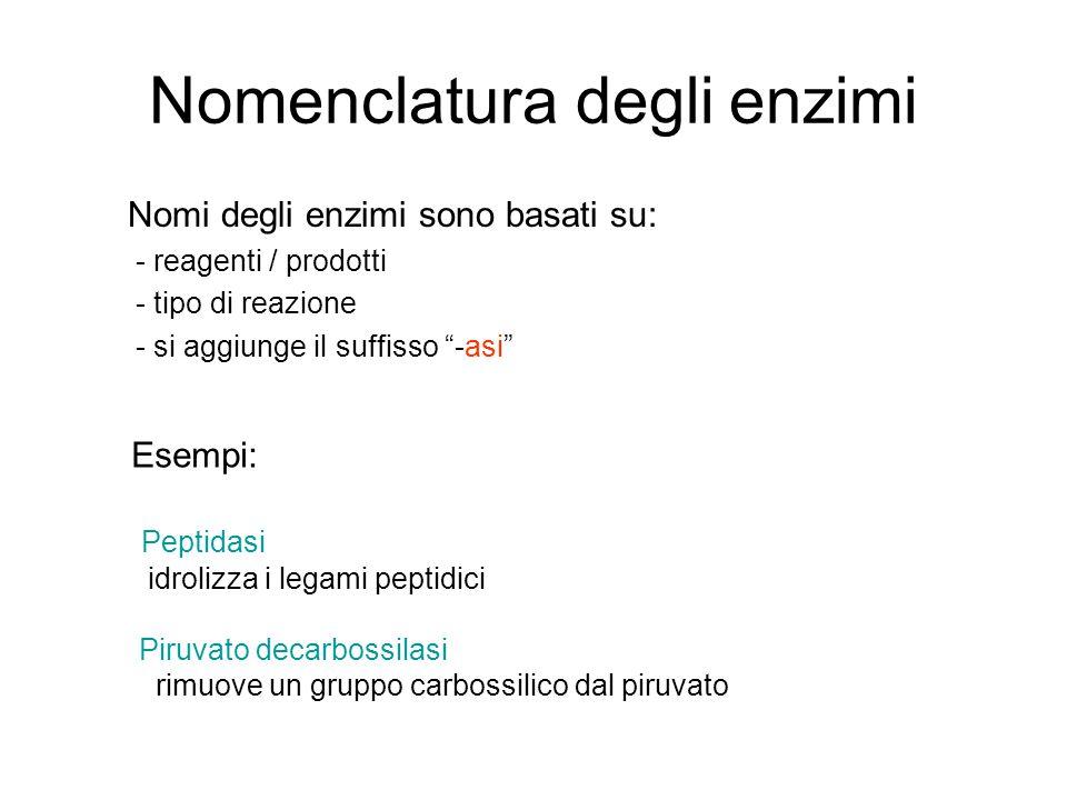 """Nomenclatura degli enzimi Nomi degli enzimi sono basati su: - reagenti / prodotti - tipo di reazione - si aggiunge il suffisso """"-asi"""" Esempi: Peptidas"""