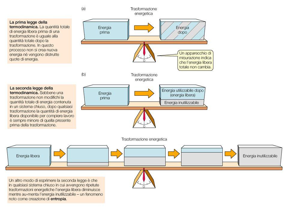 ENZIMI - Catalizzatori biologici - (quasi) tutti gli enzimi sono proteine - Sono altamente specifici - Permettono lo svolgersi di reazioni in condizioni fisiologiche - Agiscono abbassando l'energia di attivazione