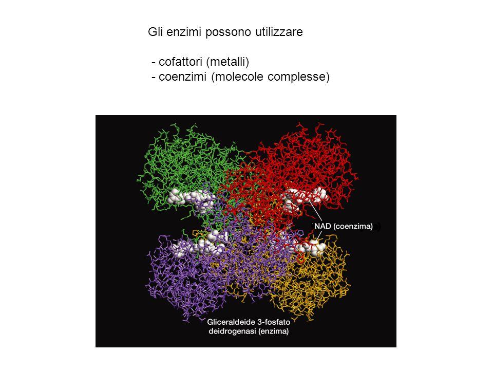 Gli enzimi possono utilizzare - cofattori (metalli) - coenzimi (molecole complesse)