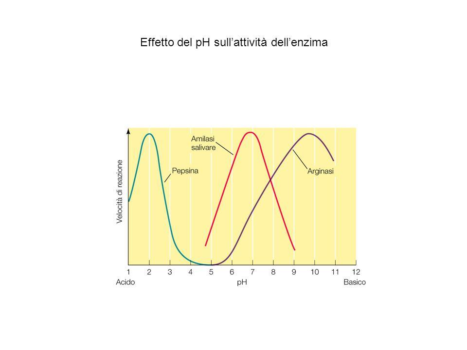 Effetto del pH sull'attività dell'enzima