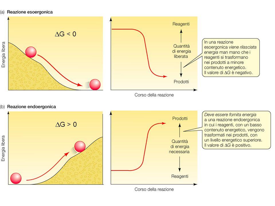 Relazione tra  G e equilibrio di una reazione A B K' eq = [prodotti] / [substrati] K' eq = [B] / [A]  G '0 = - R T lnK' eq R = Costante dei gas = 8, 315 J/(mol * K) T = 298 K