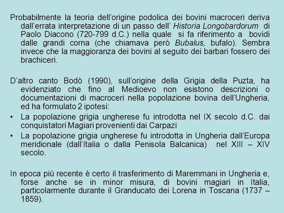 Probabilmente la teoria dell'origine podolica dei bovini macroceri deriva dall'errata interpretazione di un passo dell' Historia Longobardorum di Paol