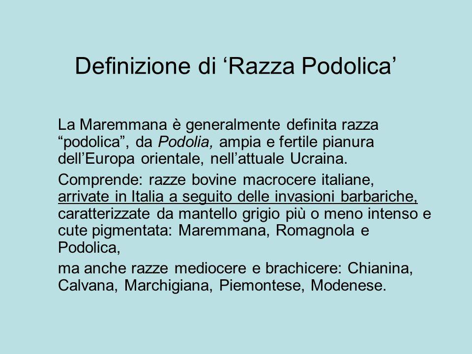 """Definizione di 'Razza Podolica' La Maremmana è generalmente definita razza """"podolica"""", da Podolia, ampia e fertile pianura dell'Europa orientale, nell"""