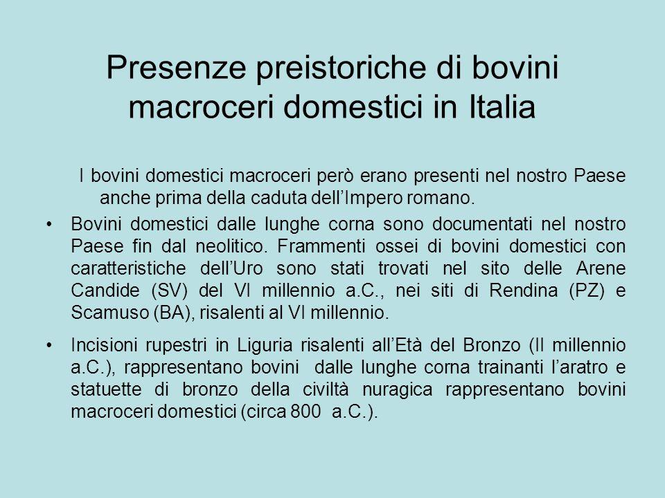 Presenze preistoriche di bovini macroceri domestici in Italia I bovini domestici macroceri però erano presenti nel nostro Paese anche prima della cadu