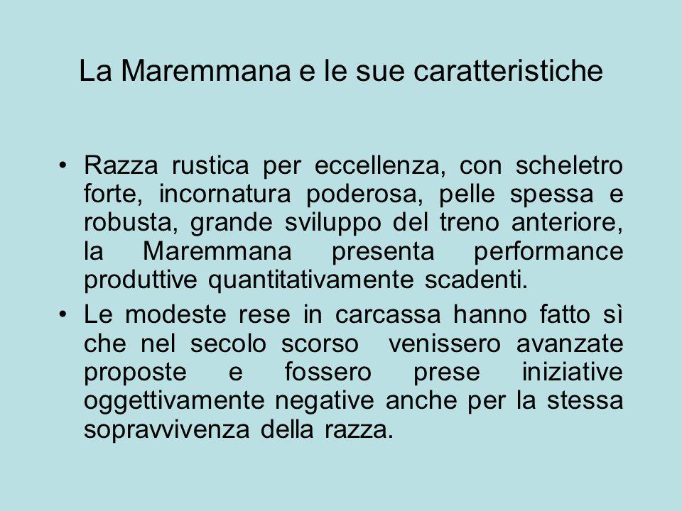 La Maremmana e le sue caratteristiche Razza rustica per eccellenza, con scheletro forte, incornatura poderosa, pelle spessa e robusta, grande sviluppo
