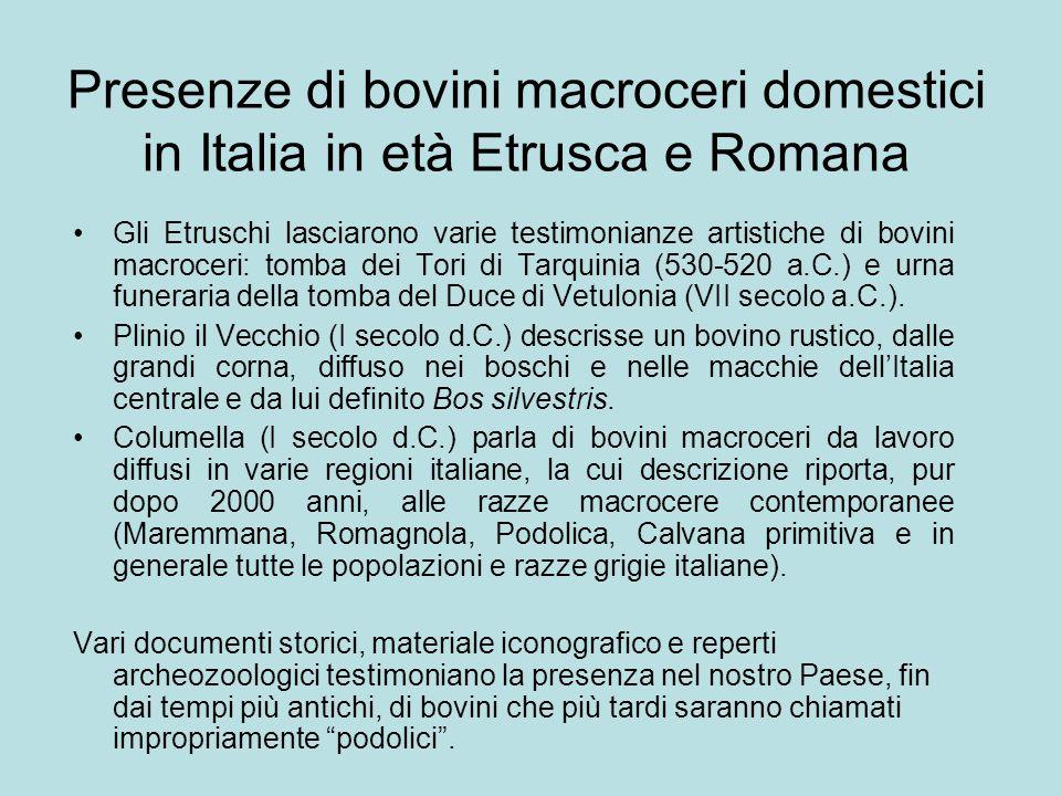 Presenze di bovini macroceri domestici in Italia in età Etrusca e Romana Gli Etruschi lasciarono varie testimonianze artistiche di bovini macroceri: t