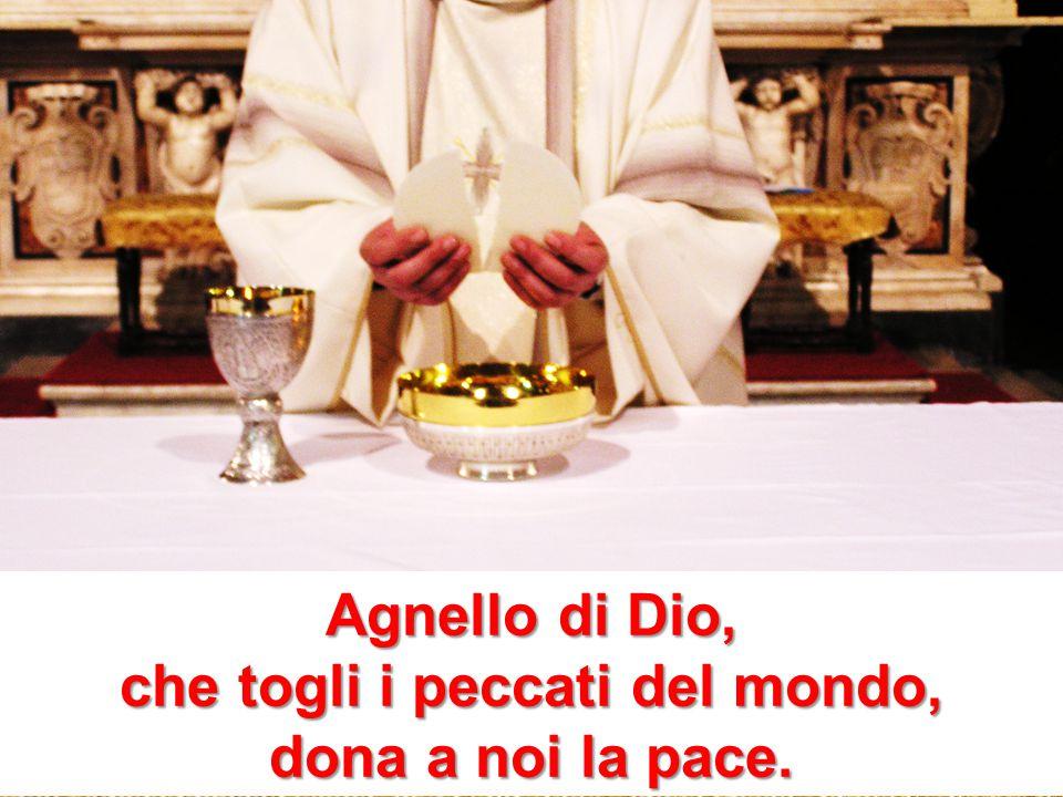 Agnello di Dio, che togli i peccati del mondo, dona a noi la pace.