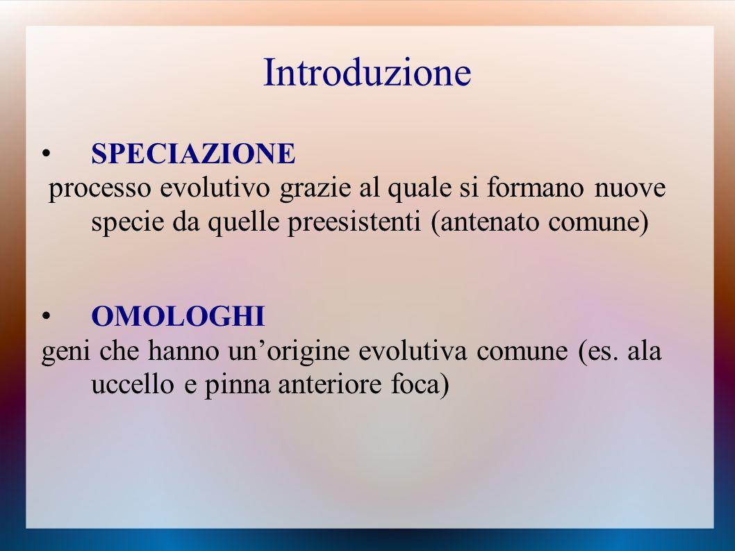 SPECIAZIONE processo evolutivo grazie al quale si formano nuove specie da quelle preesistenti (antenato comune) OMOLOGHI geni che hanno un'origine evolutiva comune (es.