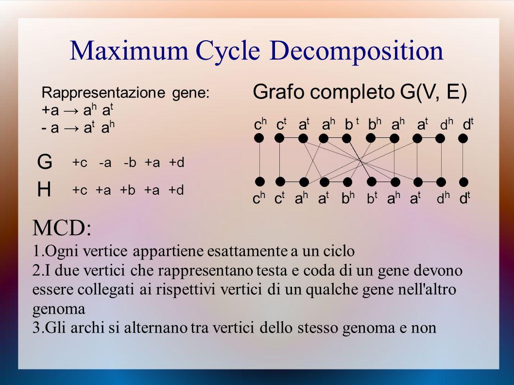 Maximum Cycle Decomposition G +c -a -b +a +d H +c +a +b +a +d Rappresentazione gene: +a → a h a t - a → a t a h c h c t a t a h b t b h a h a t d h d t c h c t a h a t b h b t a h a t d h d t Grafo completo G(V, E) MCD: 1.Ogni vertice appartiene esattamente a un ciclo 2.I due vertici che rappresentano testa e coda di un gene devono essere collegati ai rispettivi vertici di un qualche gene nell altro genoma 3.Gli archi si alternano tra vertici dello stesso genoma e non