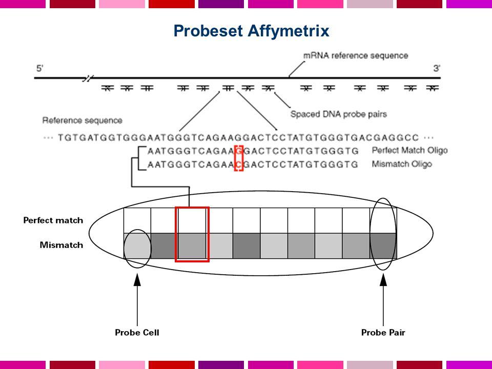 Probeset Affymetrix