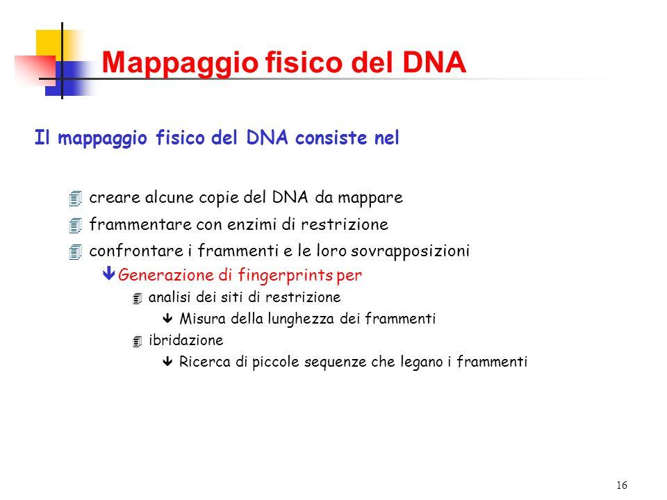 15 Mappaggio fisico del DNA Mappa fisica := localizzazione di marcatori lungo la sequenza del DNA Tecnica: RFLP (Restriction Fragments Length Polymorphism)  Esempio: Siti di restrizione  1970: Hamilton Smith scopre che HindII taglia il DNA in corrispondenza di GTGCAC o GTTAAC Il DNA umano è tagliato in circa un milione di frammenti Mutazioni interne al sito di restrizione impediscono il taglio  1973: Danna et al.