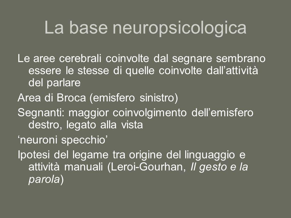 La base neuropsicologica Le aree cerebrali coinvolte dal segnare sembrano essere le stesse di quelle coinvolte dall'attività del parlare Area di Broca