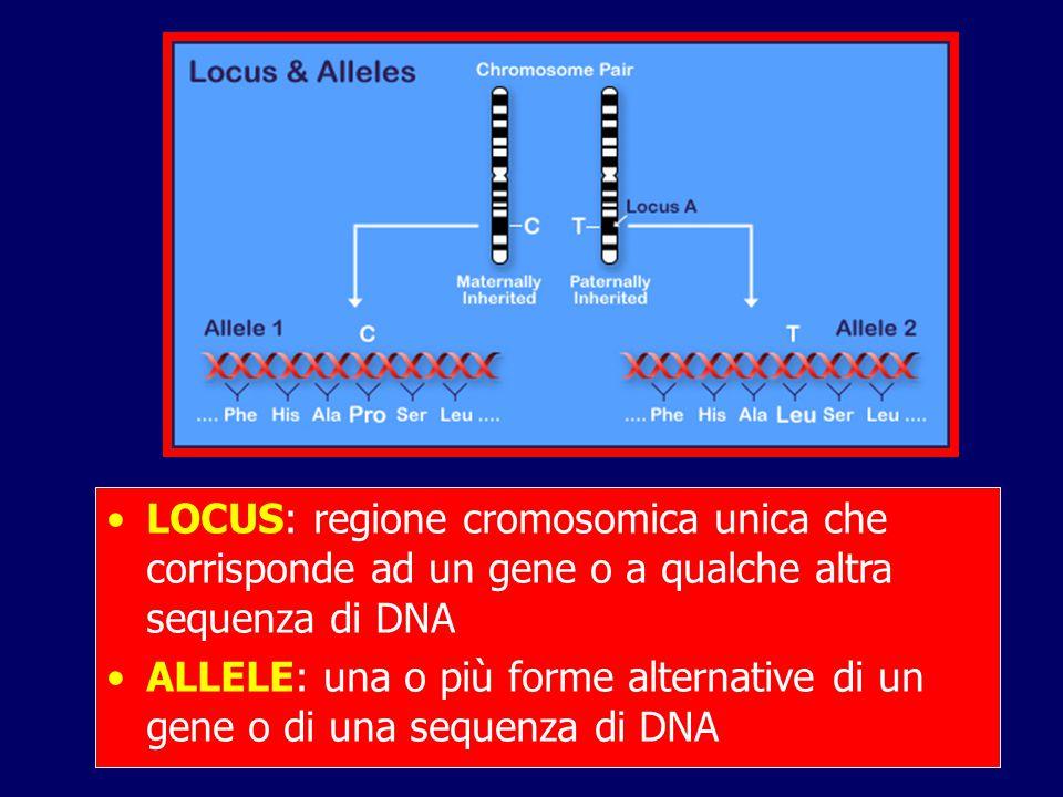 LOCUS: regione cromosomica unica che corrisponde ad un gene o a qualche altra sequenza di DNA ALLELE: una o più forme alternative di un gene o di una sequenza di DNA