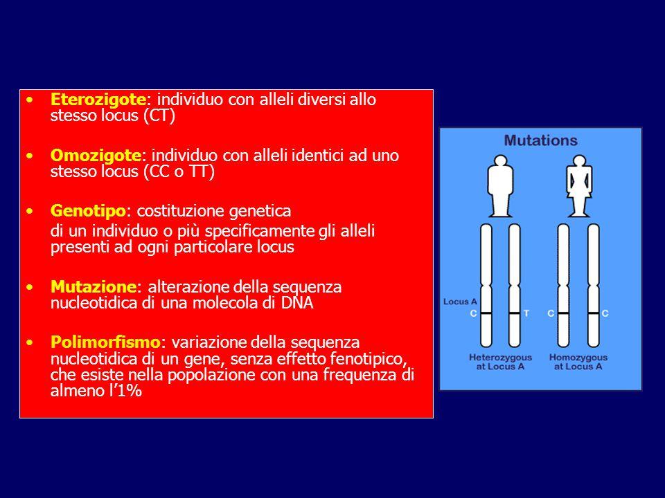 Eterozigote: individuo con alleli diversi allo stesso locus (CT) Omozigote: individuo con alleli identici ad uno stesso locus (CC o TT) Genotipo: costituzione genetica di un individuo o più specificamente gli alleli presenti ad ogni particolare locus Mutazione: alterazione della sequenza nucleotidica di una molecola di DNA Polimorfismo: variazione della sequenza nucleotidica di un gene, senza effetto fenotipico, che esiste nella popolazione con una frequenza di almeno l'1%
