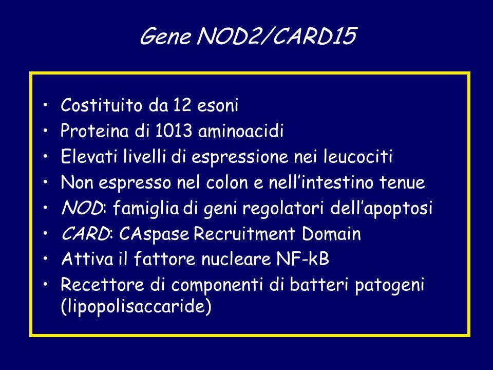 Gene NOD2/CARD15 Costituito da 12 esoni Proteina di 1013 aminoacidi Elevati livelli di espressione nei leucociti Non espresso nel colon e nell'intestino tenue NOD: famiglia di geni regolatori dell'apoptosi CARD: CAspase Recruitment Domain Attiva il fattore nucleare NF-kB Recettore di componenti di batteri patogeni (lipopolisaccaride)