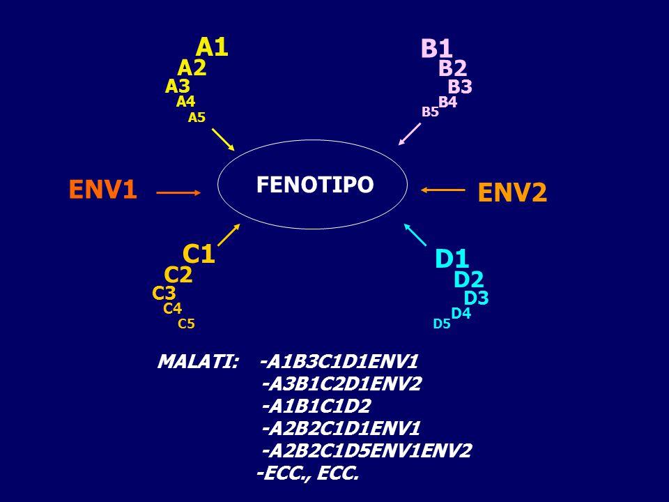 A1 A2 A3 A4 A5 B1 B2 B3 B4 B5 C1 C2 C3 C4 C5 D1 D2 D3 D4 D5 ENV1 ENV2 FENOTIPO MALATI: -A1B3C1D1ENV1 -A3B1C2D1ENV2 -A1B1C1D2 -A2B2C1D1ENV1 -A2B2C1D5ENV1ENV2 -ECC., ECC.