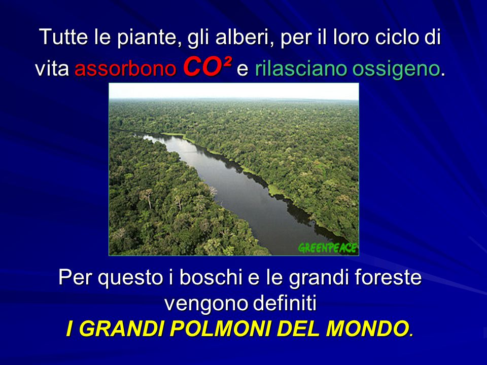 Tutte le piante, gli alberi, per il loro ciclo di vita assorbono CO² e rilasciano ossigeno. Per questo i boschi e le grandi foreste vengono definiti I