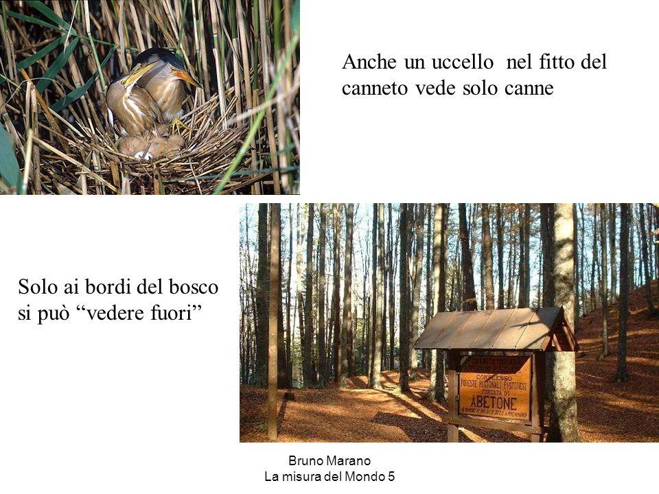 """Anche un uccello nel fitto del canneto vede solo canne Solo ai bordi del bosco si può """"vedere fuori"""""""