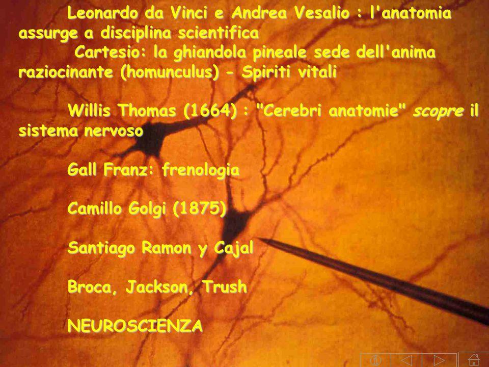 Leonardo da Vinci e Andrea Vesalio : l'anatomia assurge a disciplina scientifica Cartesio: la ghiandola pineale sede dell'anima raziocinante (homuncul