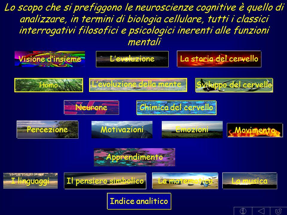Visione d'insieme Percezione Apprendimento Motivazioni I linguaggi Emozioni Lo scopo che si prefiggono le neuroscienze cognitive è quello di analizzar