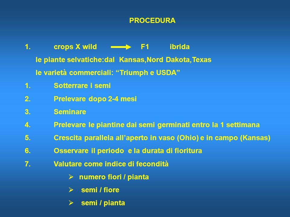 PROCEDURA 1.