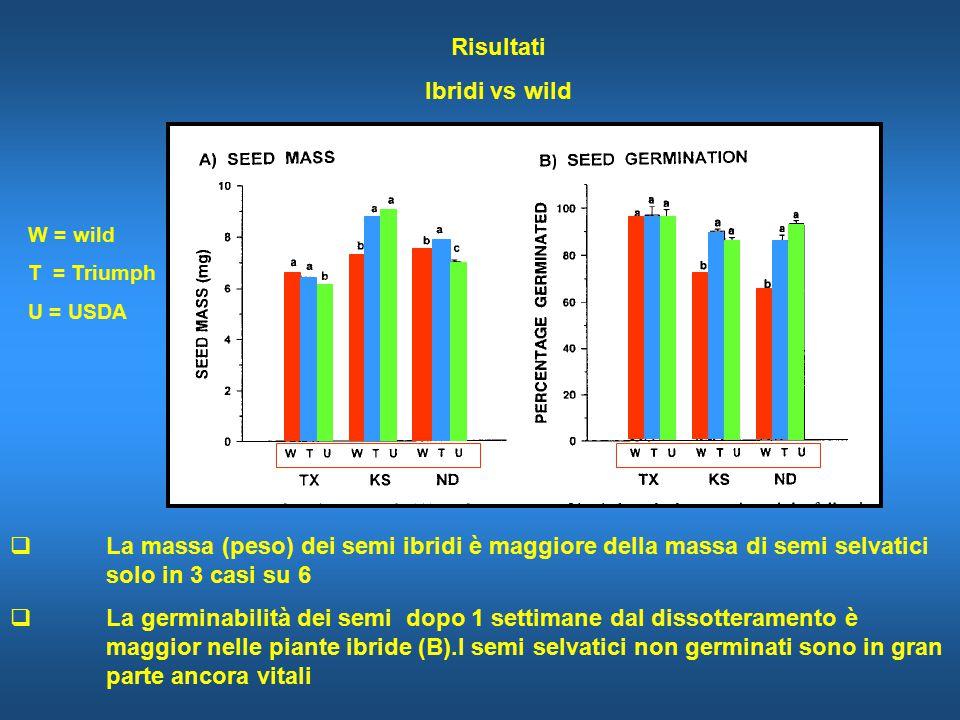 Risultati Ibridi vs wild  La massa (peso) dei semi ibridi è maggiore della massa di semi selvatici solo in 3 casi su 6  La germinabilità dei semi dopo 1 settimane dal dissotteramento è maggior nelle piante ibride (B).I semi selvatici non germinati sono in gran parte ancora vitali W = wild T = Triumph U = USDA