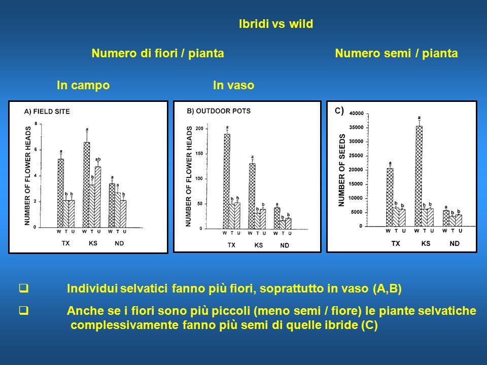  Individui selvatici fanno più fiori, soprattutto in vaso (A,B)  Anche se i fiori sono più piccoli (meno semi / fiore) le piante selvatiche complessivamente fanno più semi di quelle ibride (C) Ibridi vs wild Numero di fiori / piantaNumero semi / pianta In campo In vaso C)C)
