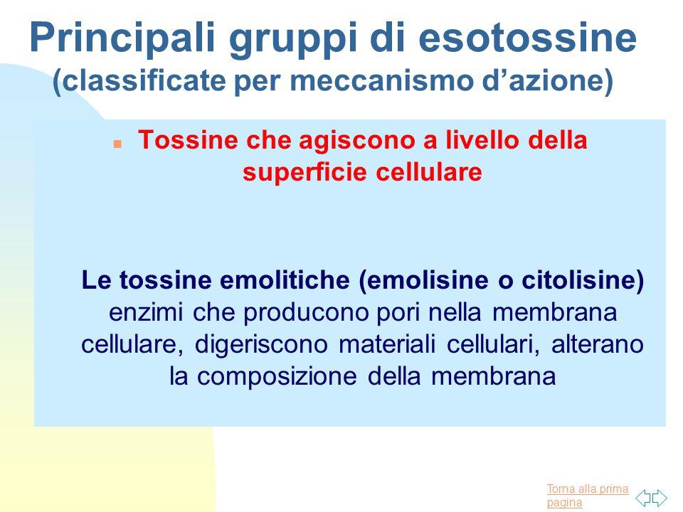 Torna alla prima pagina Principali gruppi di esotossine (classificate per meccanismo d'azione) n Tossine che agiscono a livello della superficie cellulare Le tossine emolitiche (emolisine o citolisine) enzimi che producono pori nella membrana cellulare, digeriscono materiali cellulari, alterano la composizione della membrana