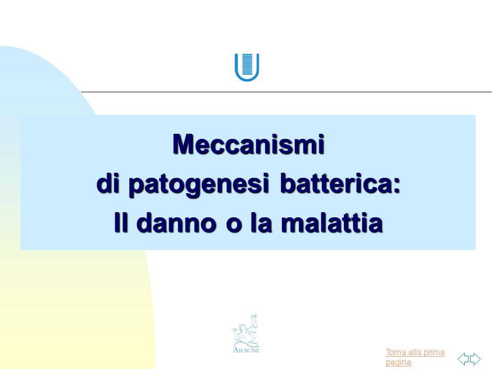Torna alla prima pagina Meccanismi di patogenesi batterica: Il danno o la malattia