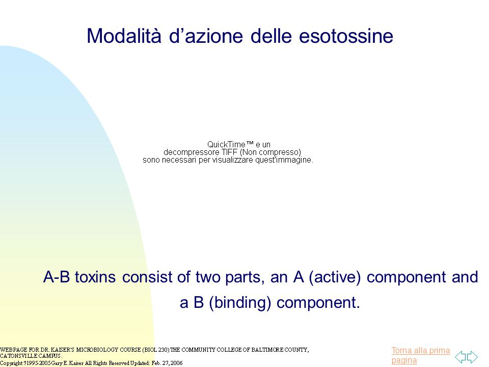 Torna alla prima pagina A-B toxins consist of two parts, an A (active) component and a B (binding) component.
