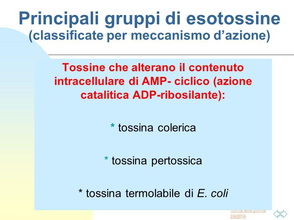 Torna alla prima pagina Principali gruppi di esotossine (classificate per meccanismo d'azione) Tossine che alterano il contenuto intracellulare di AMP- ciclico (azione catalitica ADP-ribosilante): * tossina colerica * tossina pertossica * tossina termolabile di E.