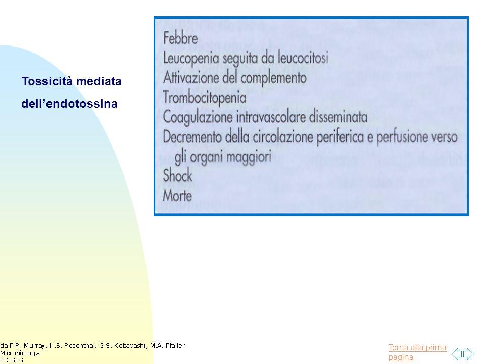 Torna alla prima pagina Tossicità mediata dell'endotossina