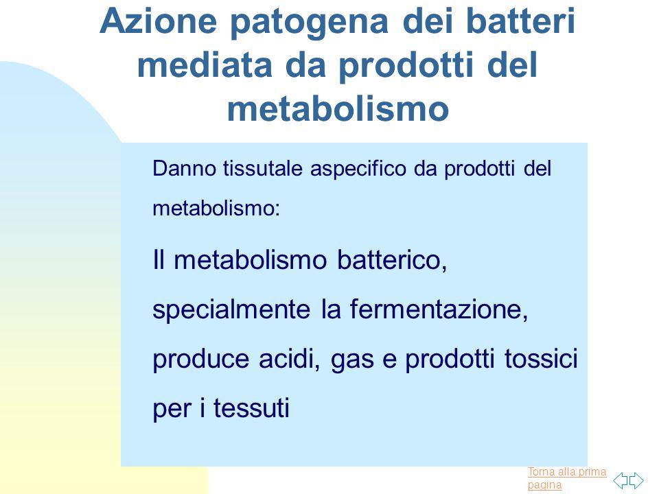 Torna alla prima pagina Azione patogena dei batteri mediata da prodotti del metabolismo Danno tissutale aspecifico da prodotti del metabolismo: Il metabolismo batterico, specialmente la fermentazione, produce acidi, gas e prodotti tossici per i tessuti