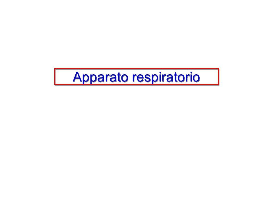 La maggiore profondità del respiro fa aumentare la ventilazione polmonare che viene anche incrementata dall'aumento di frequenza degli atti respiratori
