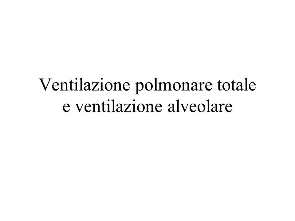 Ventilazione polmonare totale e ventilazione alveolare