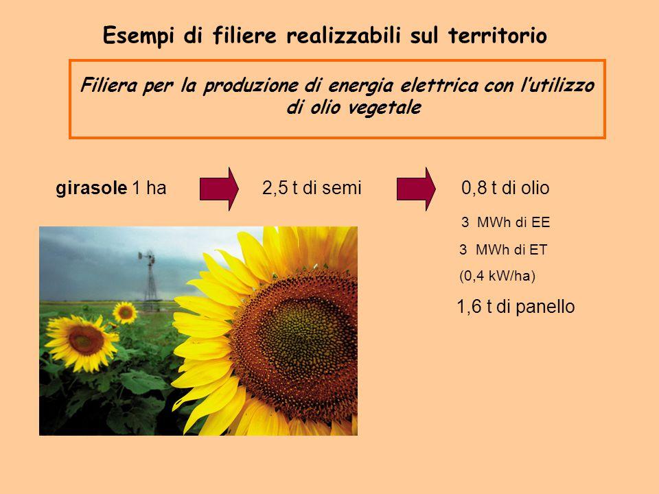 girasole 1 ha 2,5 t di semi 0,8 t di olio 3 MWh di EE 3 MWh di ET (0,4 kW/ha) 1,6 t di panello Esempi di filiere realizzabili sul territorio Filiera p