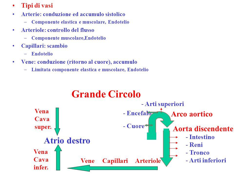 Tipi di vasi Arterie: conduzione ed accumulo sistolico –Componente elastica e muscolare, Endotelio Arteriole: controllo del flusso –Componente muscolare,Endotelio Capillari: scambio –Endotelio Vene: conduzione (ritorno al cuore), accumulo –Limitata componente elastica e muscolare, Endotelio Arco aortico Aorta discendente - Cuore - Encefalo - Arti superiori - Intestino - Reni - Tronco - Arti inferiori Vena Cava infer.