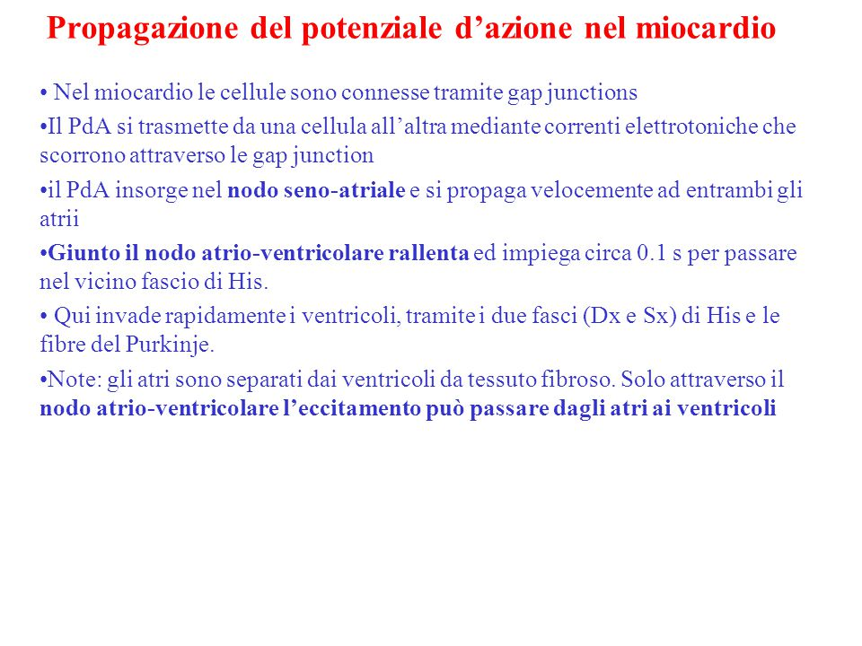 + + + + + +20 mV- 90 mV L'eccitamento si propaga alle cellule adiacenti tramite le Gap junction