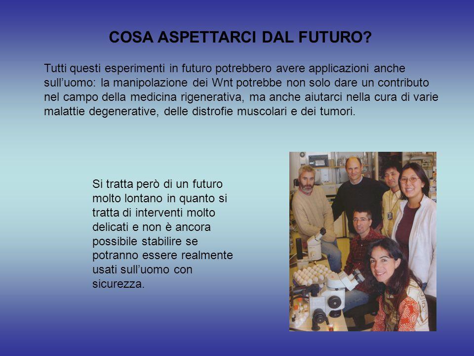 COSA ASPETTARCI DAL FUTURO? Tutti questi esperimenti in futuro potrebbero avere applicazioni anche sull'uomo: la manipolazione dei Wnt potrebbe non so