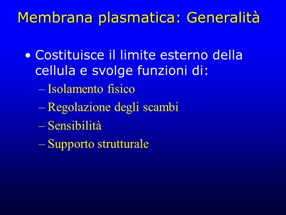 Pinocitosi e fagocitosi Pinocitosi ( cellula che beve ) –Formazione di vescicole riempite di fluido extracellulare –Processo non specifico come l'endocitosi mediata da recettore, ma molto comune Fagocitosi ( cellula che mangia ) –Produzione di vescicole contenenti materiali solidi (anche grandi come la cellula stessa) –Operata solo da cellule del sistema immunitario