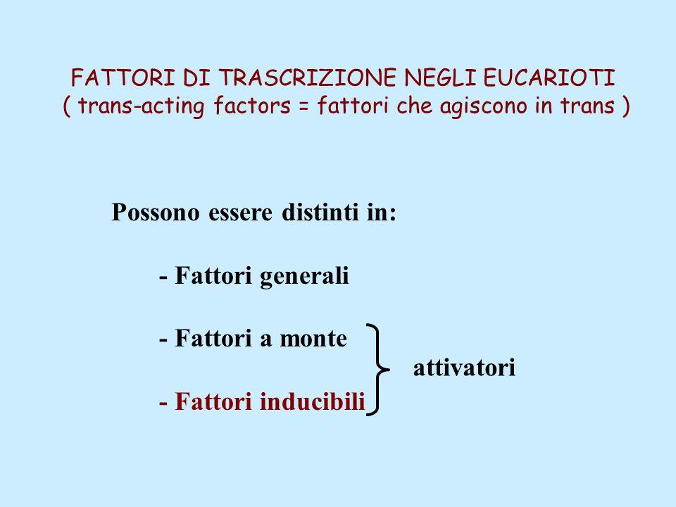 FATTORI DI TRASCRIZIONE NEGLI EUCARIOTI ( trans-acting factors = fattori che agiscono in trans ) Possono essere distinti in: - Fattori generali - Fattori a monte - Fattori inducibili attivatori